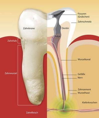 Bild 1 - (Gesundheit, Zähne, Zahnarzt)