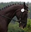 geht vorallem bei pferden mit kurzer mähne gut...;) - (Pferde, Frisur, reiten)