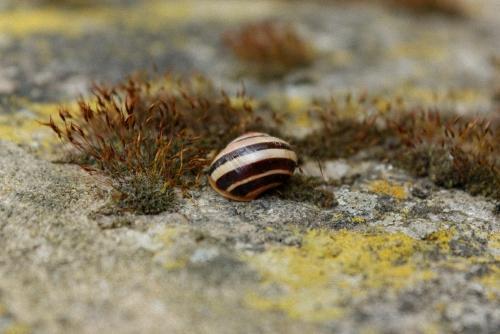 Schnecke und Moos auf Mauer - (Fotografie, Natur, fotografieren)