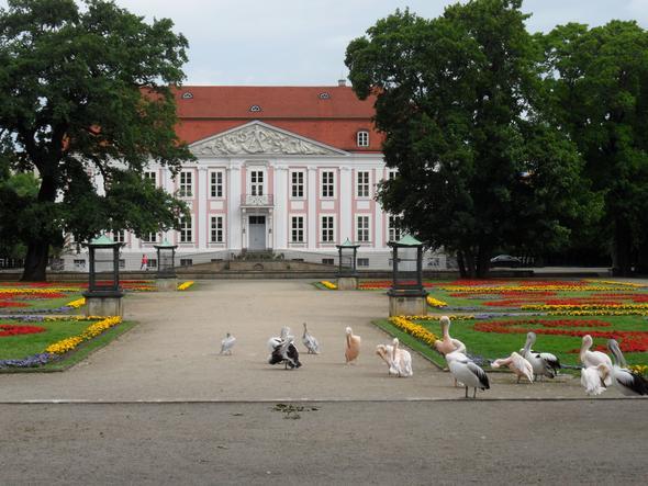 Schloß Friedrichsfelde in Berlin - (Bilder, Foto, Kamera)