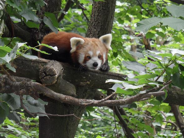 Tierpark Berlin - (Bilder, Foto, Kamera)