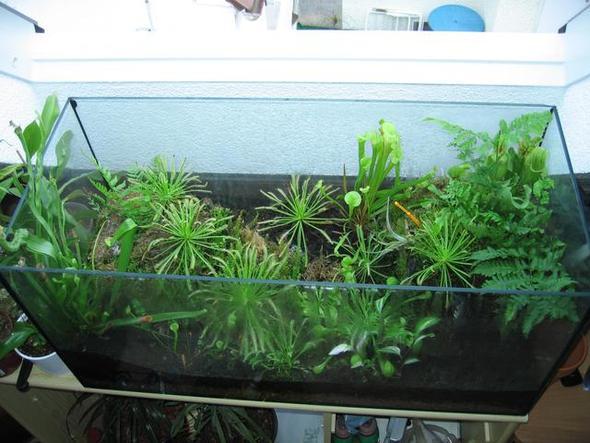 aquarium was damit machen insekten basteln pflanzen. Black Bedroom Furniture Sets. Home Design Ideas