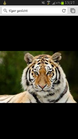 da - (Bilder, tiger)