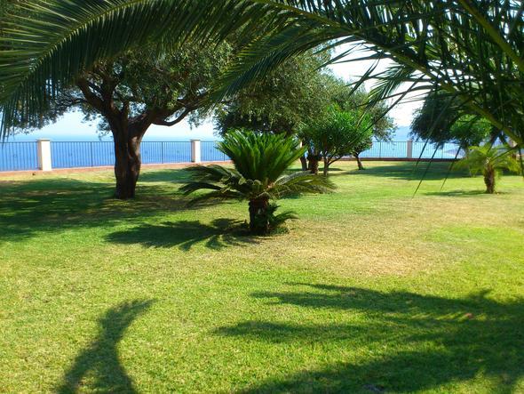 um welche palmenart bzw palmenfrucht handelt es sich pflanzen palme. Black Bedroom Furniture Sets. Home Design Ideas