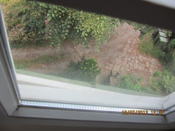 Wetterschenkel, Fenster fast geschlossen - (Tiere, Katze, Katzen)