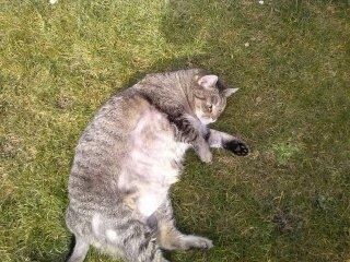 Nelly - (Tiere, Haustiere, Katzen)