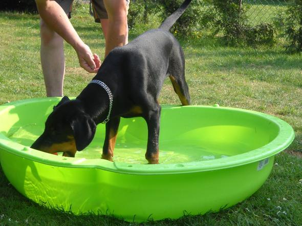Wassermuschel - (Hund, lernen, schwimmen)