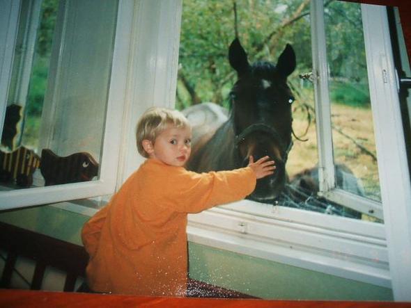 Otto - (Tiere, Pferde, Gesundheit Pferde)