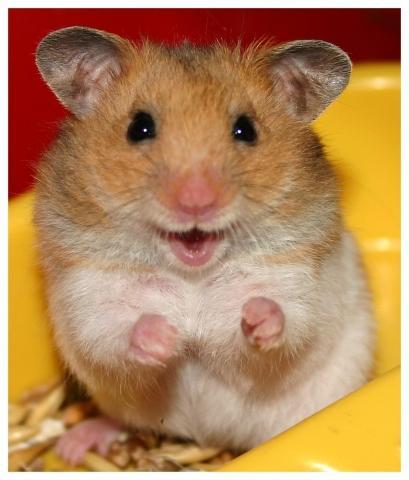 lebt mein hamster noch lange tiere lebenserwartung. Black Bedroom Furniture Sets. Home Design Ideas