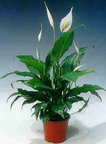 Pflanzen Fürs Bad welche pflanzen sind fürs bad geeignet wohnen
