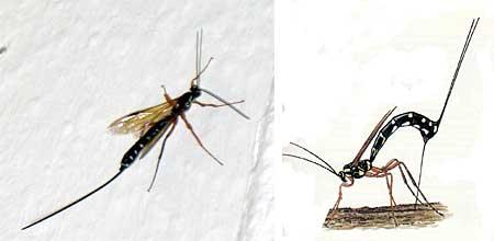 gestochen aber wovon gesundheit haut insekten. Black Bedroom Furniture Sets. Home Design Ideas