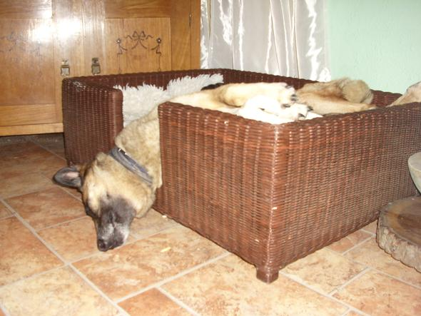 und so,...... gggggggg - (Hund, Malinois)