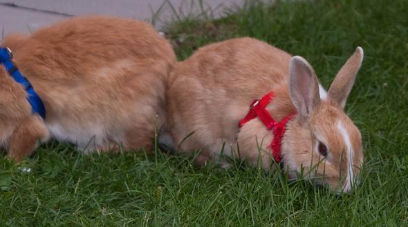 Rämy - (Kaninchen, Tierarzt, Hasen)