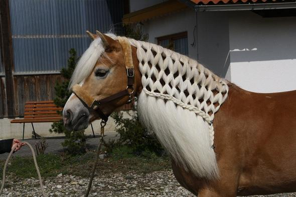 Frisuren Für Pferde Frisur Pflege