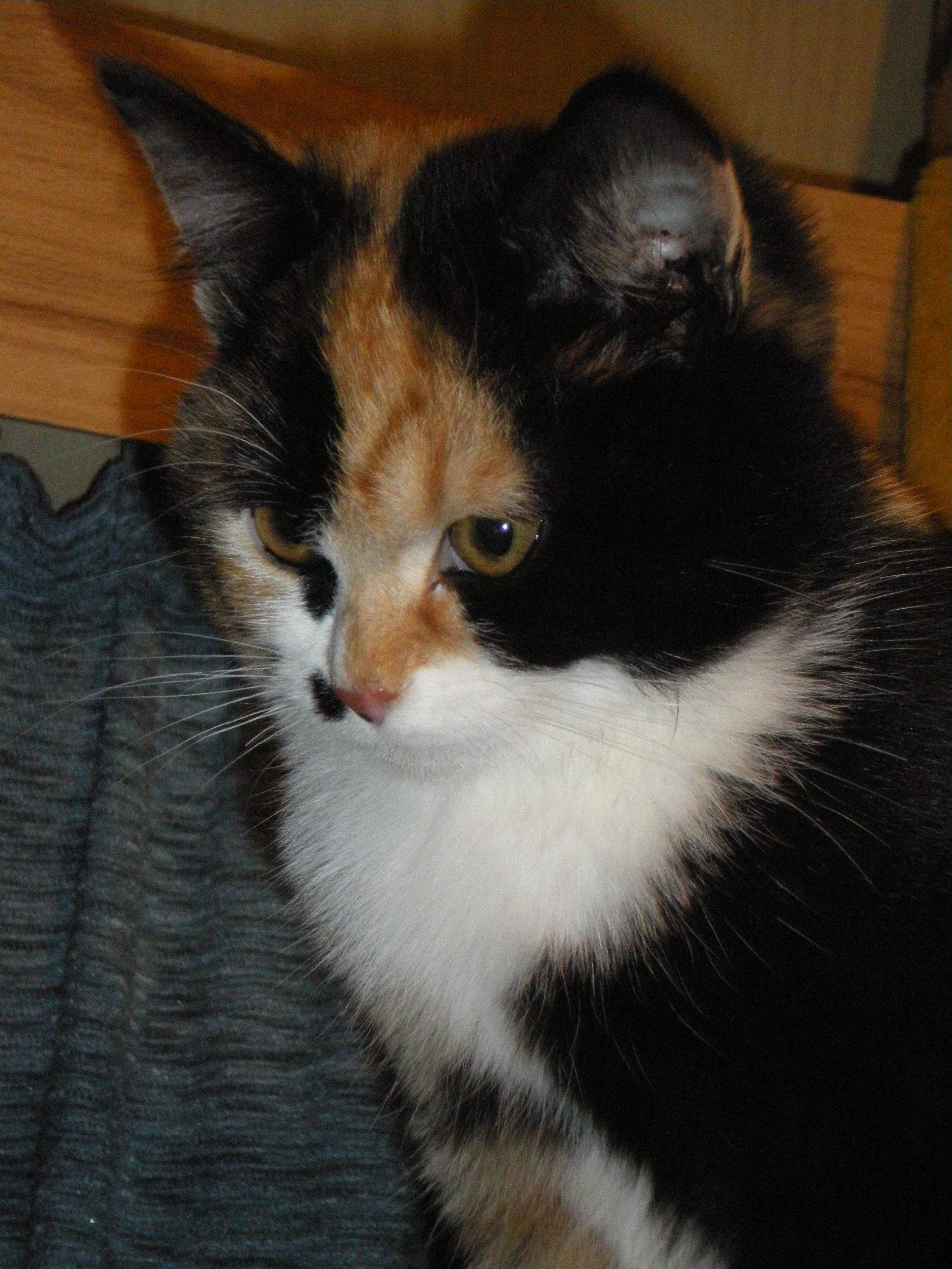 warrior cats bilder der katzen
