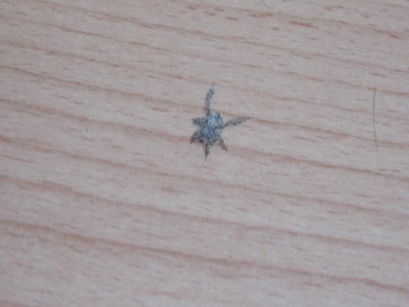 spinne - (Wohnung, Spinne, staub)