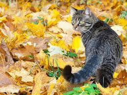 Katze - (Bilder, Warrior Cats)