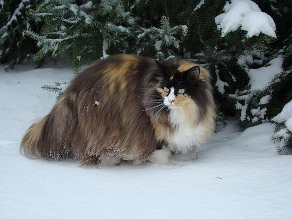 Bild - (Bilder, Warrior Cats)