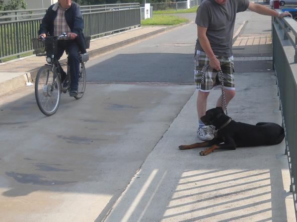 Radfahrer - (Gesundheit, Hund, Stress)