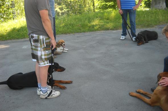 Mensch/Hund-Begegnungen - (Gesundheit, Hund, Stress)