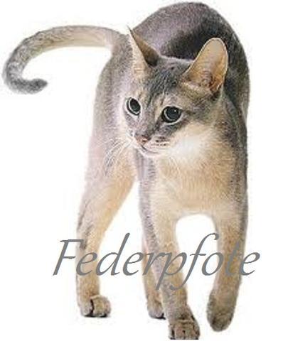ed - (Bilder, Warrior Cats)