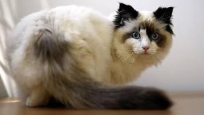 sa - (Bilder, Warrior Cats)