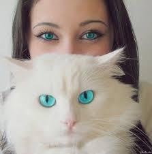 jetzt ohne die frau da hihi - (Bilder, Warrior Cats)