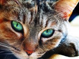 rd - (Bilder, Warrior Cats)