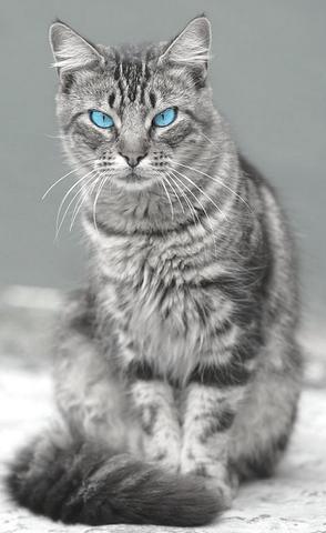la - (Bilder, Warrior Cats)