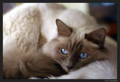 lilili - (Bilder, Warrior Cats)