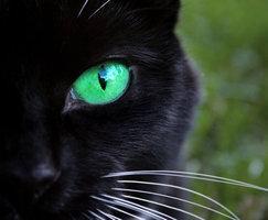 lai - (Bilder, Warrior Cats)