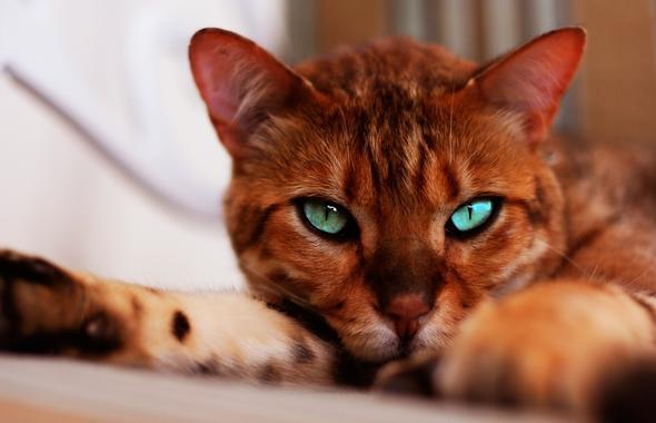 das  - (Bilder, Warrior Cats)