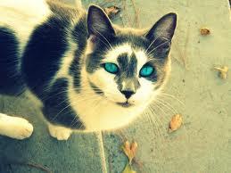 die - (Bilder, Warrior Cats)