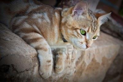 der - (Bilder, Warrior Cats)