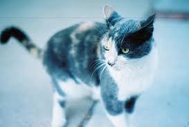 lolli - (Bilder, Warrior Cats)