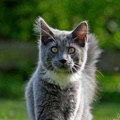 loli - (Bilder, Warrior Cats)