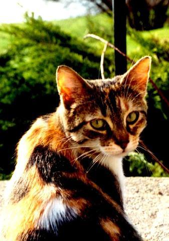 wa - (Bilder, Warrior Cats)