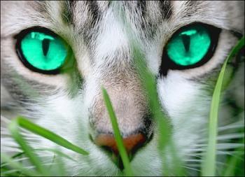rr - (Bilder, Warrior Cats)