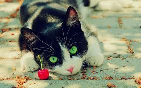 io - (Bilder, Warrior Cats)