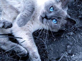 rc - (Bilder, Warrior Cats)