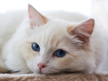 at - (Bilder, Warrior Cats)
