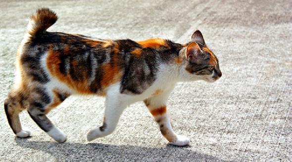 ss - (Bilder, Warrior Cats)