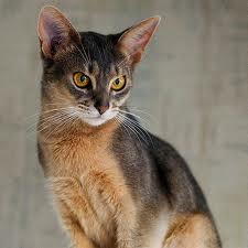indcool - (Bilder, Warrior Cats)