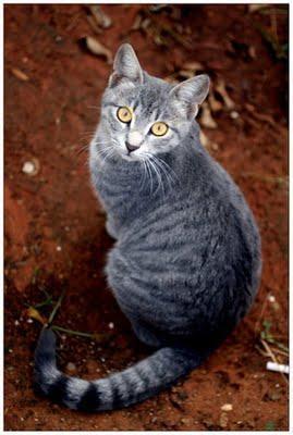 rf - (Bilder, Warrior Cats)
