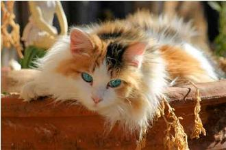 zh - (Bilder, Warrior Cats)
