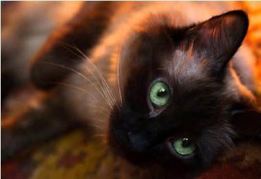 uj - (Bilder, Warrior Cats)