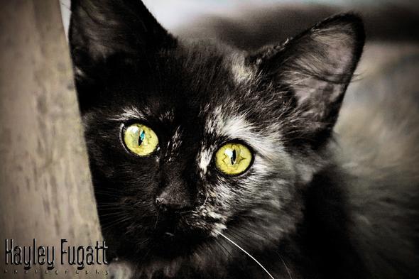 ik - (Bilder, Warrior Cats)