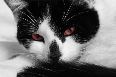 ol - (Bilder, Warrior Cats)