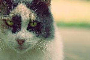 ppö - (Bilder, Warrior Cats)