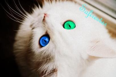 ay - (Bilder, Warrior Cats)